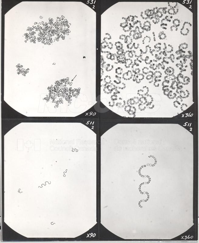 Microbiology 010