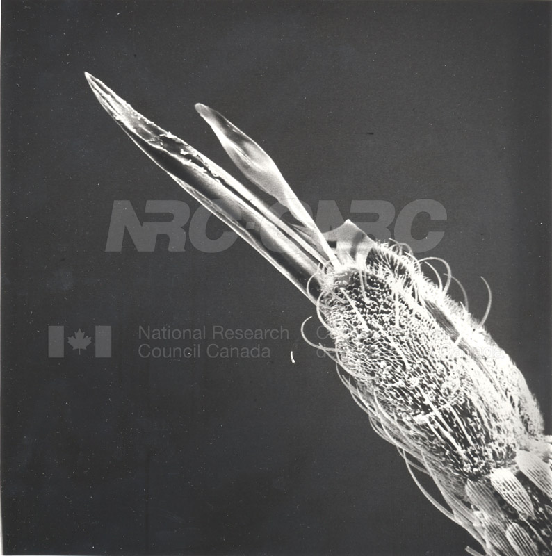 Biology University of Alberta Entymology 005