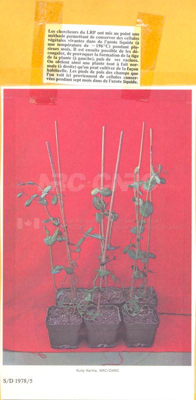 Brochure Biological Sciences 82-03-029