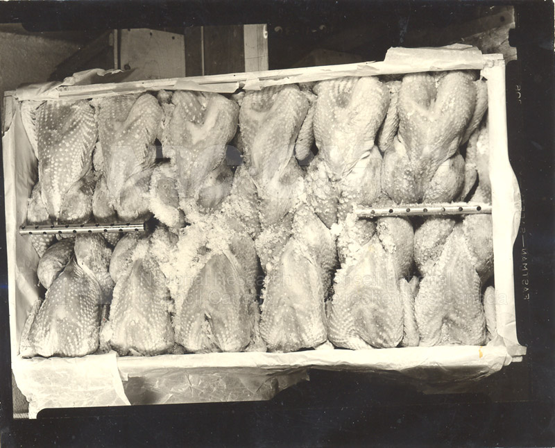 Food Storage and Transport- Poultry