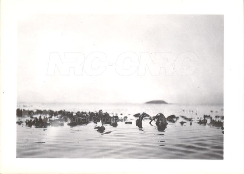 Laminarias- St. John's Ledge 1949 001