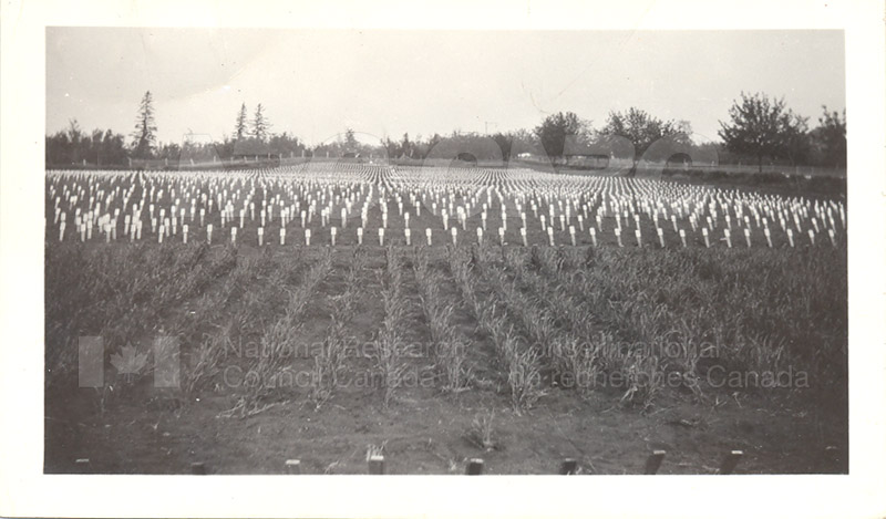 Wheat- Genetic Nursery with Individual Rows of Plants- University of Alberta 1931