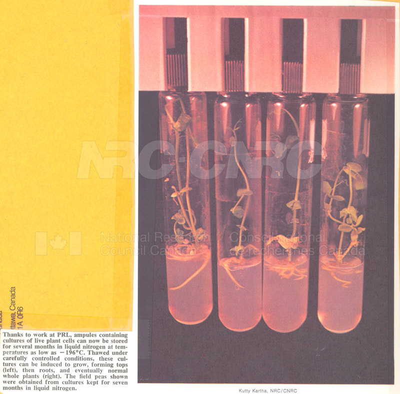 Brochure Biological Sciences 82-03-028