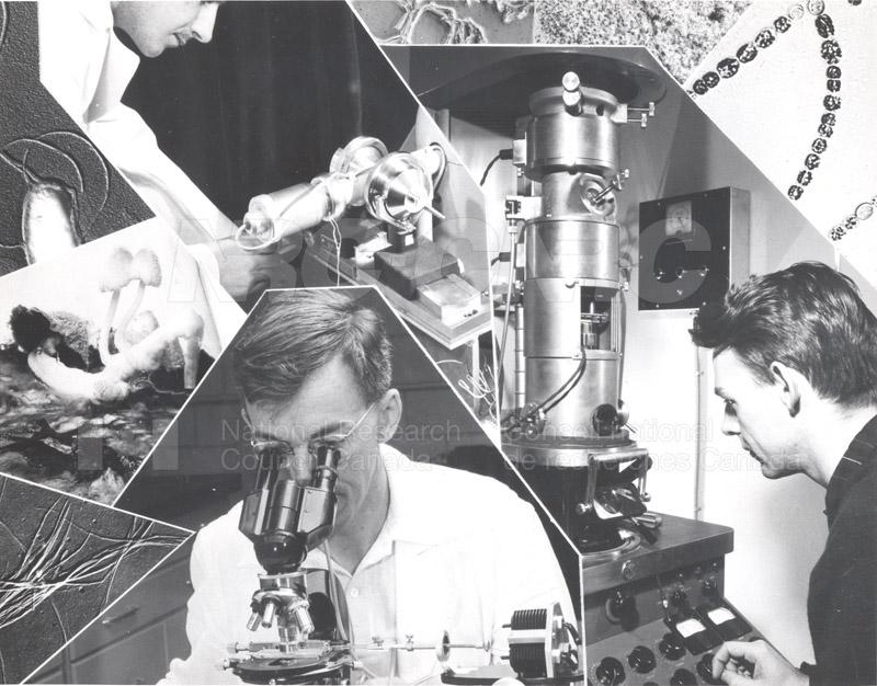 Montage- Paul Gorman (c), Stan Bayley (l), Fred Cooper (r)