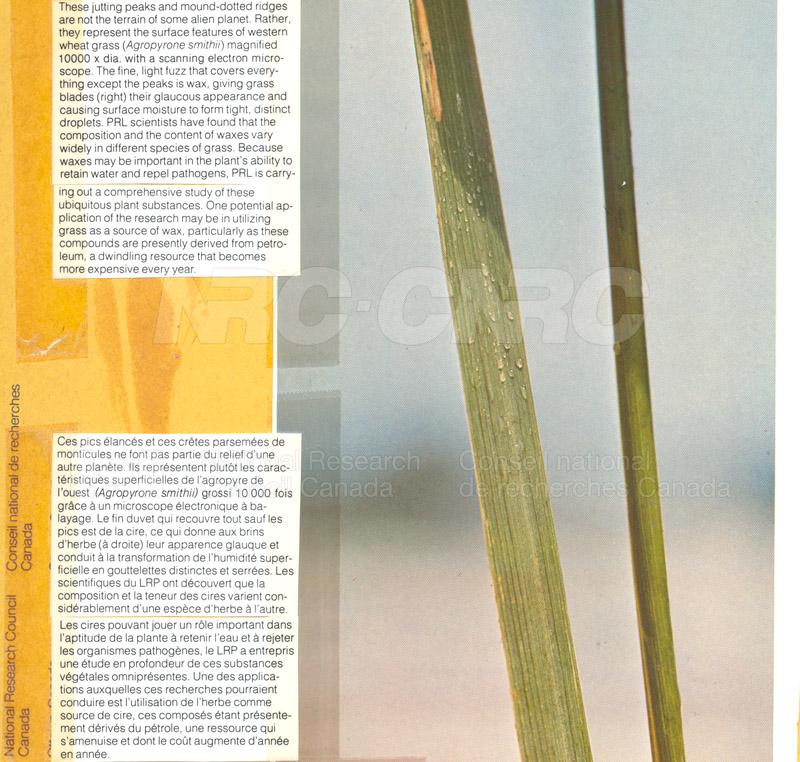 Brochure Biological Sciences 82-03-007