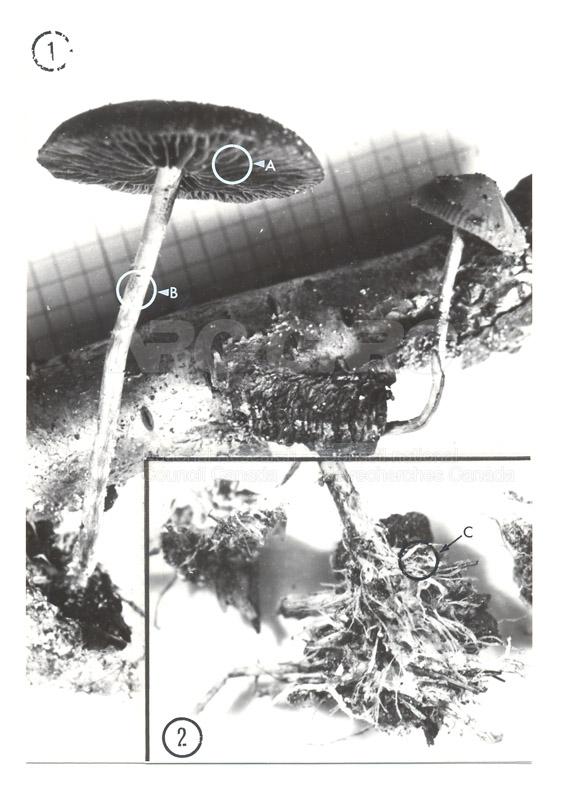 Laval c.1969-72 004